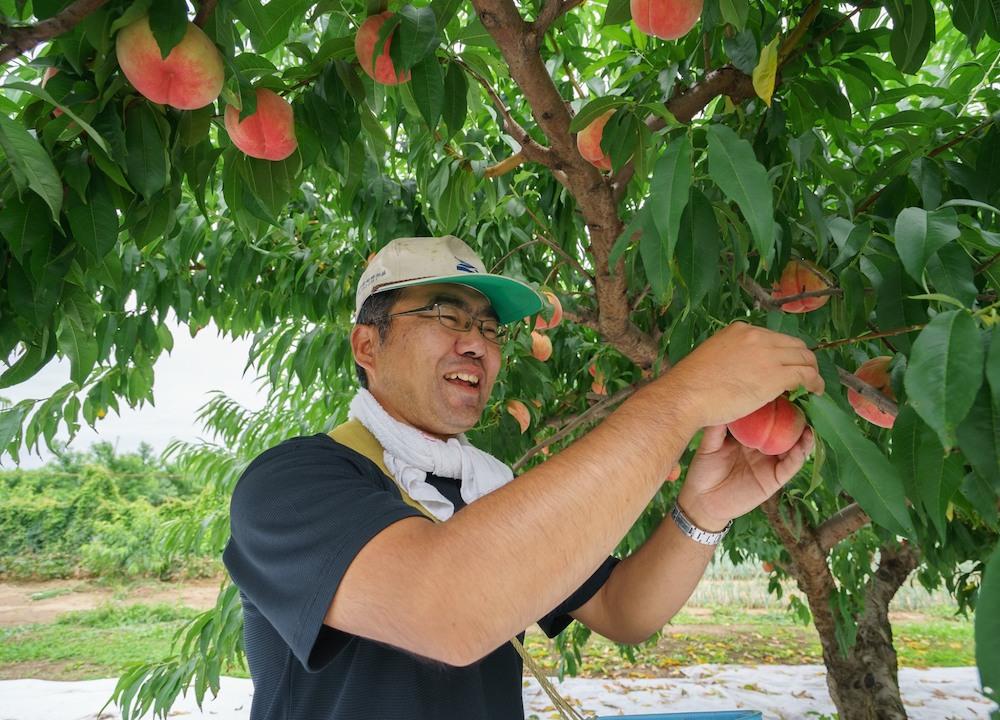 福井島県桑折町の桃農家