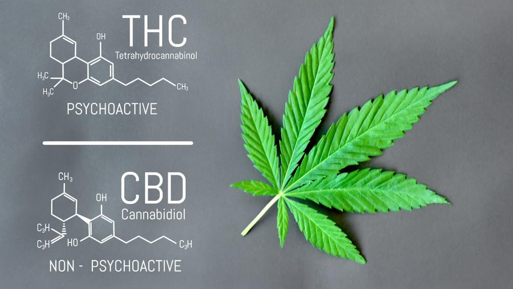 CBDと大麻の違いは?