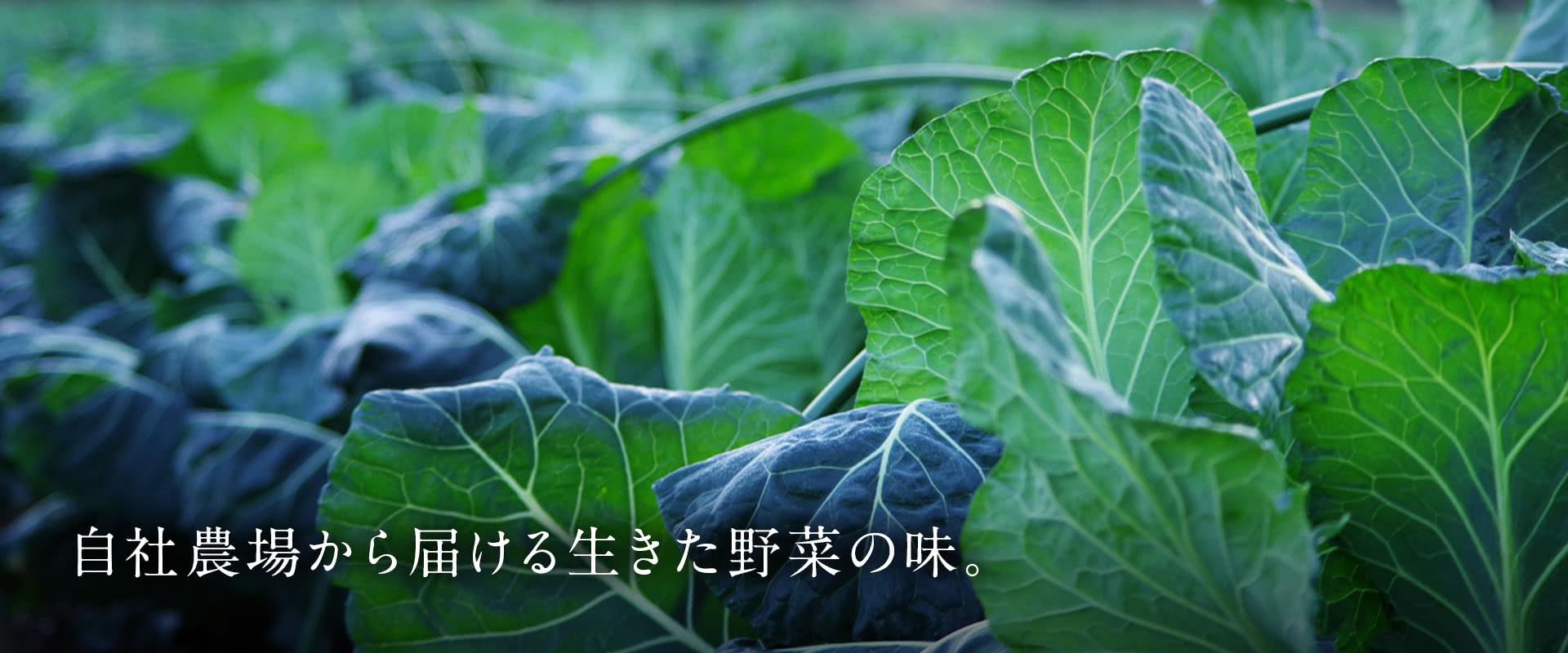 自社農場から届ける生きた野菜の味。