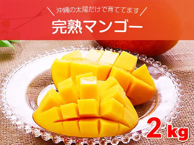 沖縄の太陽だけで育ててます 完熟マンゴー 約2キロセット (4~8玉入り) 沖縄県産