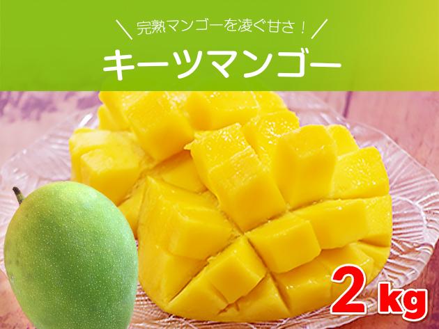 完熟マンゴーを凌ぐ甘さ キーツマンゴー約2キロ(2玉~3玉) 沖縄県産