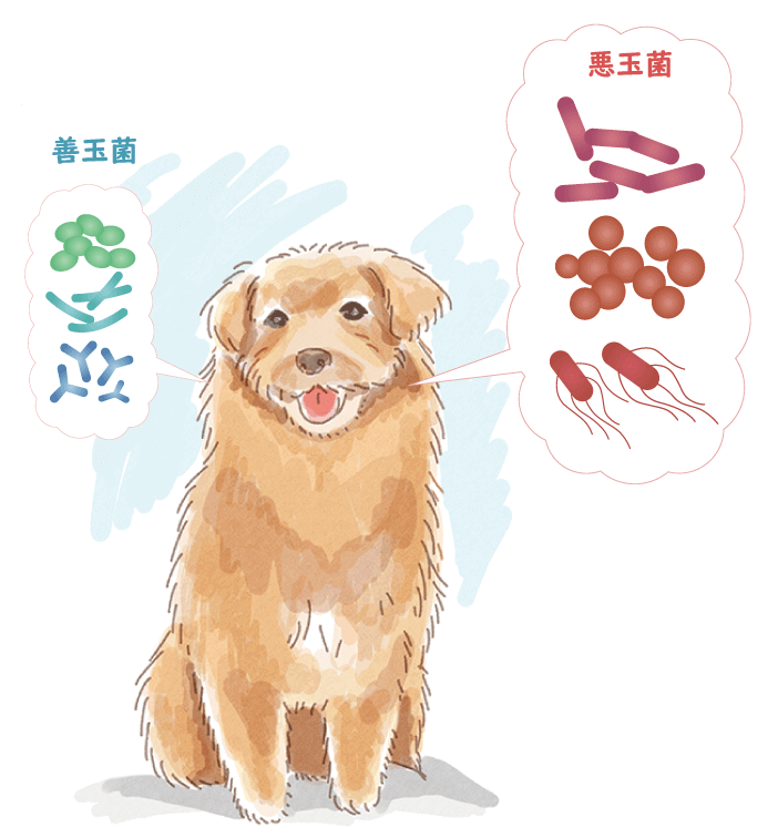 犬のイラスト(口の中には善玉菌と悪玉菌)