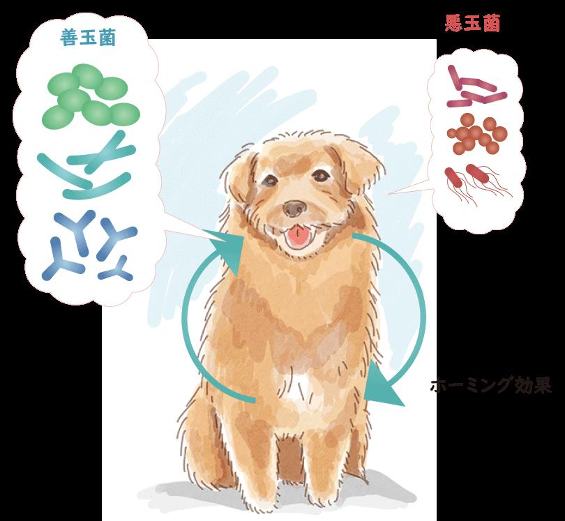 犬のイラスト(ホーミング効果のイメージ)