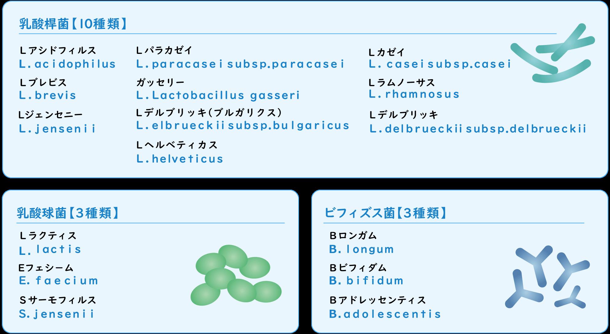 乳酸桿菌【10種類】乳酸球菌【3種類】ビフィズス菌【3種類】の一覧表
