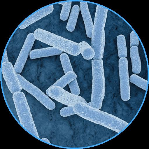 乳酸菌・ビフィズス菌のイメージ写真