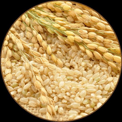 国産玄米の写真