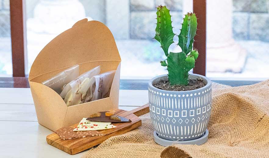 鉢物 サボテンセット アソート+ショコラカッセ 3種 ギフトセット