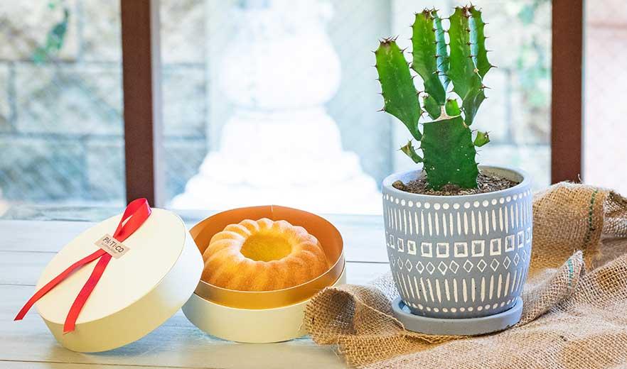 鉢物 サボテンセット アソート+パンドジェンヌ ギフトセット