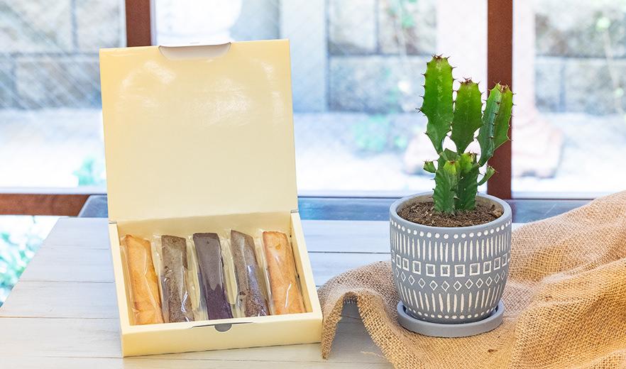 鉢物 サボテンセット アソート+フィナンシェ詰め合わせ ギフトセット